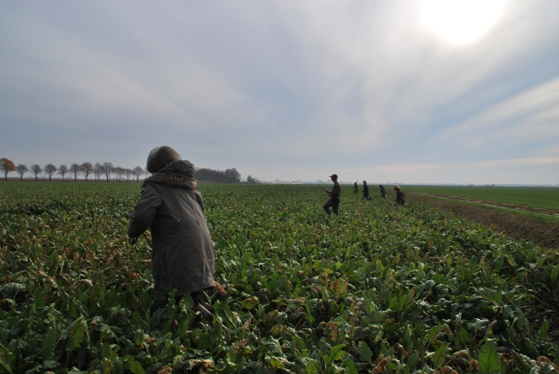 Walk-up in the sugar beet